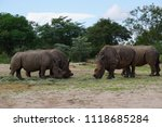 herd of... | Shutterstock . vector #1118685284