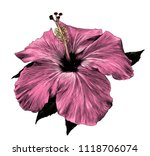 hibiscus flower close   up of a ...   Shutterstock .eps vector #1118706074