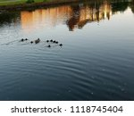ducks family swimming in the... | Shutterstock . vector #1118745404