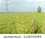 frisian meadow  dutch landscape | Shutterstock . vector #1118745599