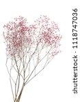 dry pink baby's breath flowers...   Shutterstock . vector #1118747036