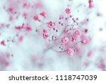 dry pink baby's breath flowers...   Shutterstock . vector #1118747039