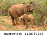 an elephant mother and her calf ... | Shutterstock . vector #1118753168