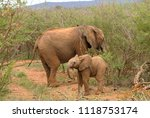 an elephant mother and her calf ... | Shutterstock . vector #1118753174
