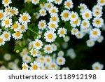 shallow focus view of an...   Shutterstock . vector #1118912198