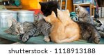 cat family time | Shutterstock . vector #1118913188