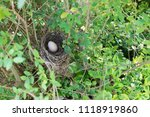 bird nest with egg | Shutterstock . vector #1118919860
