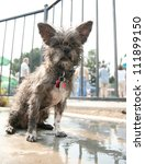 a mutt at a public pool - stock photo