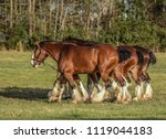 Clydesdale Horses Out For A...