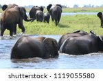 group of elephants  adults and... | Shutterstock . vector #1119055580