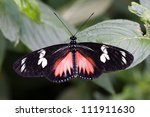 Butterfly  Costa Rica