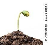 small plant seedling isolated... | Shutterstock . vector #1119118556