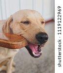close up the dog  labrador... | Shutterstock . vector #1119122969