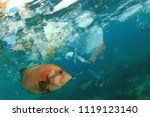 fish and plastic pollution in... | Shutterstock . vector #1119123140