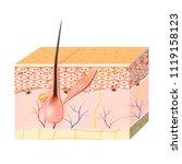 skin cells. melanin  and... | Shutterstock . vector #1119158123