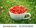 fresh red currant in a white cup | Shutterstock . vector #1119161834
