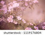 floral background with a branch ... | Shutterstock . vector #1119176804
