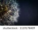 close up photo of dandelion... | Shutterstock . vector #1119178409