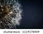 close up photo of dandelion... | Shutterstock . vector #1119178409