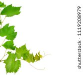 vine and leaves isolated on... | Shutterstock . vector #1119208979