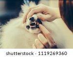 pomeranian dog on the table for ... | Shutterstock . vector #1119269360