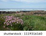 rocky sea shore near bamburgh... | Shutterstock . vector #1119316160