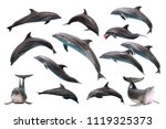 Set of Bottlenose Dolphin on white isolated background - stock photo
