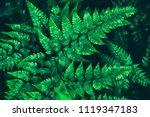 fern leaves  dark green foliage ... | Shutterstock . vector #1119347183