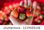 strawberry. fresh organic...   Shutterstock . vector #1119435146