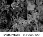 a blurred foreground with a...   Shutterstock . vector #1119500420