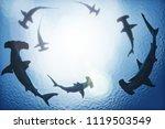 school of hammerhead sharks... | Shutterstock . vector #1119503549