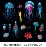Set Of The Jellyfish  Corals ...