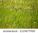beautiful flowers of wild... | Shutterstock . vector #1119677930