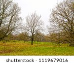 beautiful trees without leaves... | Shutterstock . vector #1119679016