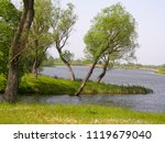 beautiful trees on the shore of ... | Shutterstock . vector #1119679040