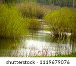beautiful bushes in the water.... | Shutterstock . vector #1119679076