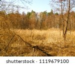 very marshy forest lake in... | Shutterstock . vector #1119679100