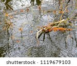 beautiful reflection of tree... | Shutterstock . vector #1119679103