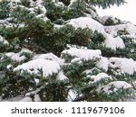 branches of fir trees covered... | Shutterstock . vector #1119679106