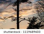 bird sitting on the tree...   Shutterstock . vector #1119689603
