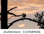 bird sitting on the tree...   Shutterstock . vector #1119689606