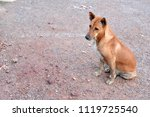 blur picture of alone dog... | Shutterstock . vector #1119725540