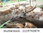 Close Up Of Deer Eating Green...