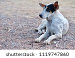 blur picture of alone dog lie... | Shutterstock . vector #1119747860