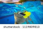 golden retriever  dog ...   Shutterstock . vector #1119809813