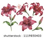 Set Of Watercolor Lilies  Hand...