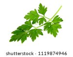 fresh green parsley leaves... | Shutterstock . vector #1119874946