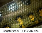 detail of a large anaconda...   Shutterstock . vector #1119902423