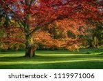 Beautiful  Old  Red Oak ...