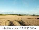 summertime crops in the british ... | Shutterstock . vector #1119998486